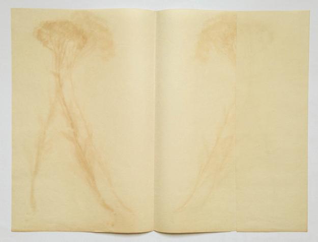 Ella Littwitz Which Came Up in a Night, and Perished in a Night (Pyjamas #11) 2014 Organischer Druck, gerahmt 54 x 70 cm Unique Salzburger Kunstverein